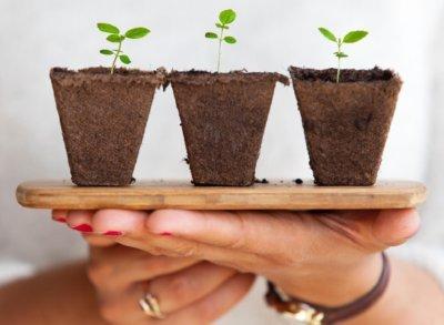 Five new seedlings